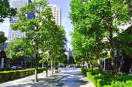 Bäume und Fußweg in einer Stadt, im Hintergrund befinden sich Hochhäuser.
